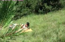 Neukend stel in het bos stiekem gefilmt